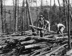 Piling up poles, Camp Roosevelt, George Washin...