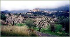 """399 """"Tivissa"""" (Enllasez - Enric LLaó) Tags: goldstaraward soe tivisa pobles pueblos"""