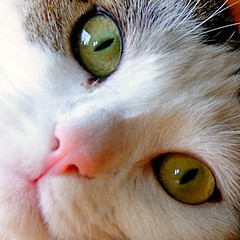 Have a nice weekend everybody (Cajaflez) Tags: friends pet cute cat kat chat gato katze gatto poes jasmijn blueribbonwinner c1100 cc800 cc700 cc400 cc300 cc200 cc100 cc500 cc1000 cc600 cc900 cc1200 bej abigfave bestofcats platinumphoto anawesomeshot kittyschoice rubyphotographer 100commentgroup catnipaddicts 5prettykittycommentspartiv newgoldenseal