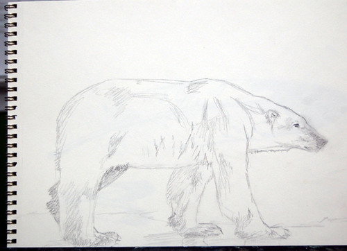 polar bear sketch, Kathleen Coy