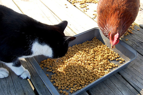they make the cats nervous