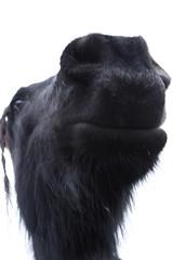 20090207_Midlaren_168 copy (Pim Geerts) Tags: horse head paardenkop paardenhoofd