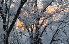 sun and snow3
