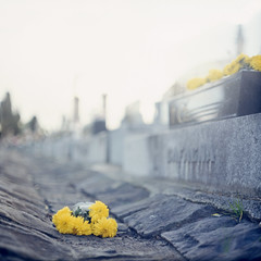 already it is daylight (memetic) Tags: flowers 6x6 cemetery death solitude carlton kodak cemetary melbourne forgotten discarded e100vs p6 pentaconsix takeninjuly2007
