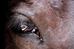 Il cavallo vede... e riflette. (Xelisabetta) Tags: horse reflection canon eyes occhi sguardo cavallo riflesso eos400d xelisabetta fotocolturenatura elisabettagonzales settimana122009romamor