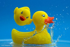 Dive In (ICT_photo) Tags: blue yellow toy duck rubberducky splash float bathtime ictphoto ianthomasguelphontario