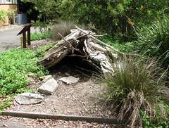 The Royal Botanic Gardens, Sydney, NSW (dunedoo) Tags: sydney australia nsw newsouthwales botanicalgardens royalbotanicgardens sydneyroyalbotanicgardens sydneybotanicgardens royalbotanicgardenssydney theroyalbotanicgardens