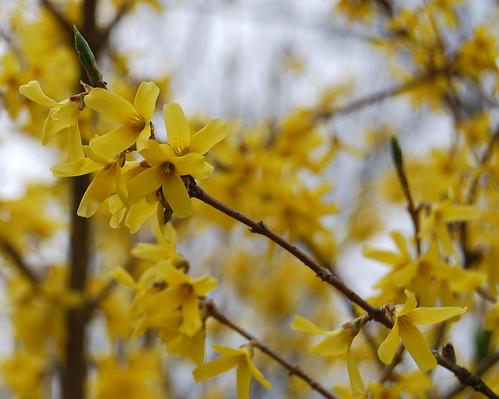 Spring Awakening 17