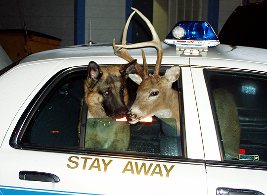 deer_wants_to_join_the_police_k_9_a