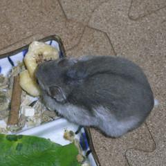 バナナチップを食べるコーキ