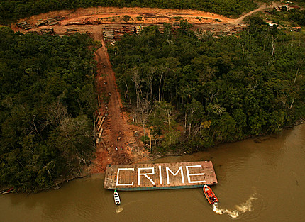 Greenpeace finds illegal logging operation in the Amazon Rainforest