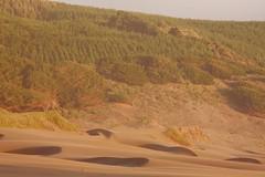 forest and dunes (Juan Barra Photography) Tags: chile trees sunset santafe tree forest atardecer sand árboles raw dunes dune best arena bosque árbol duna dunas cubism coth regióndelbiobio lebu mywinners nocropped provinciadearauco theperfectphotographer laamalia dragondaggerphoto dragondaggerawards selectbestfavorites