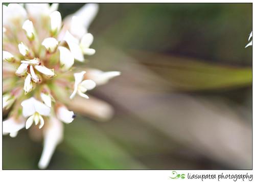 Blogflower3