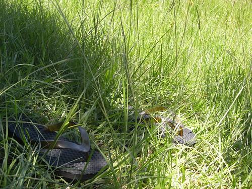 你拍攝的 4陽光草地。