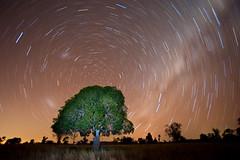 When I hear music (Mel Sinclair) Tags: light sky colour tree night nikon exposure ground queensland startrails d700 nikon1835mmf35
