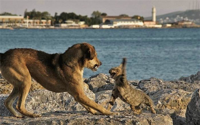 cats&dogs_02