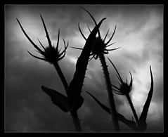 559 Black Dream (Nebojsa Mladjenovic) Tags: light sky bw mist black nature monochrome clouds digital dark outdoors lumix san noir magic negro dream nb panasonic ciel dreams cb nuage nuages priroda nero noire fz50 svetlost oblaci crno snovi mladjenovic