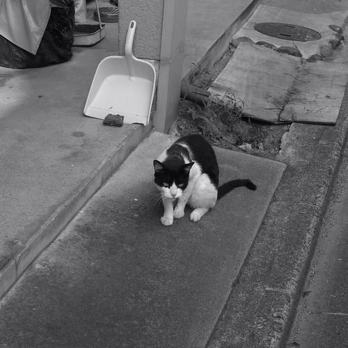 Today's Cat@20090818
