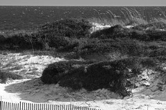 watersound dunes b&w