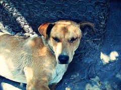 Good Bye!! ( Jovas  ) Tags: dog pet animal perro mascota fujifilmfinepixj10