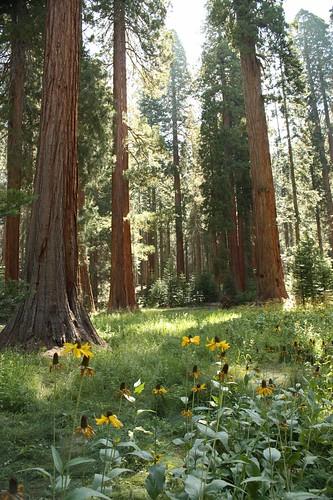 401 tall trees
