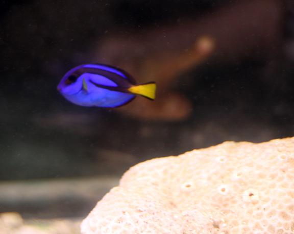 aquarium dora