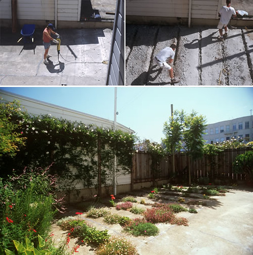 crack gardens 2