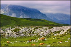 Oxygen and peace (Pilar Azaa) Tags: sky mountain clouds peace cows paz oxygen cielo nubes montaa vacas picosdeeuropa oxgeno abigfave citrit betterthangood theperfectphotographers 100commentgroup grouptripod vosplusbellesphotos pilarazaa