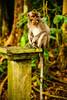 (ion-bogdan dumitrescu) Tags: bali indonesia bitzi summer09 ibdp mg8331sm findgetty ibdpro wwwibdpro ionbogdandumitrescuphotography