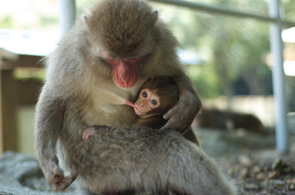 monkey #4