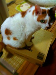 密林を征する猫
