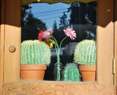 pretty windowbox (3cala) Tags: canada urbannature