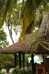 IMG_0573_c (Pentera) Tags: maldives banyantree vabbingaru
