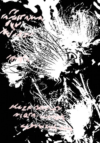 Anemone in black and white with abstract font