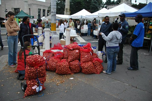 Daffodil Project Distribution, Grand Army Plaza, October 2009