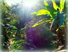 Horto Florestal de Belo Horizonte (sergim1) Tags: park city parque cidade brazil naturaleza lake flower tree minasgerais verde green bird nature birds brasil lago atardecer evening rainforest minas bresil camino path natureza flor ciudad aves brasilien vert palmeiras vila ave palmtree tropical belohorizonte floresta rvore egret mata ville gara caminho entardecer horto mataatlntica rbole florestatropical bresilien lacque hortoflorestalbelohorizonte
