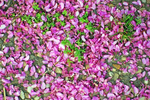 blooming5