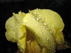 the beautiful site of a rainy day (torsten hansen (berlin)) Tags: rain drops wasser hansen cristal tropfen torsten kristall ather