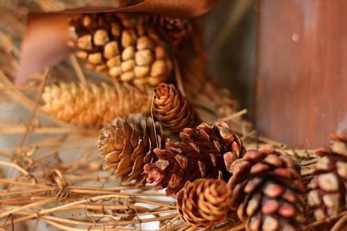 Pinecones