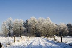 winterbos (Patrick Goossens) Tags: winter snow frost forrest sneeuw bos enschede twente
