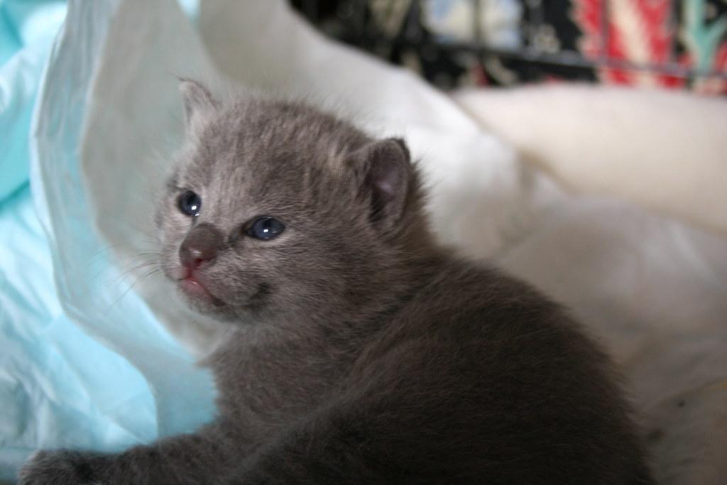 Kittens of Pegusha 3186992509_cb6f77d054_b