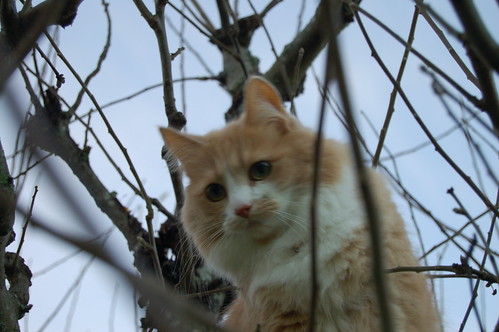 Smilla in a tree
