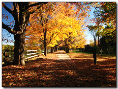 Screensaver Drive (Lisa-S) Tags: autumn trees ontario canada fall leaves rural canon fence drive screensaver farm lisas explore driveway milton allrightsreserved halton kilbride naturesfinest dec09 3780 s3is colorphotoaward theunforgettablepictures betterthangood dragondaggeraward copyrightlisastokes gappool