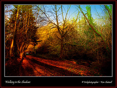 Walking in the Shadows (Irishphotographer) Tags: autumn trees ireland sunset sky irish tree art beach nature water oneaday sunshine sunrise naked landscape waterfall wildlife stunning spiritual sureal skys hdr irishart kinkade movingwater inthecountry coarmagh beautifulireland nakedbeauty sunsetshadow clareglen irishphotographer besthdr colourartaward worldwidelandscapes pentaxk20d photosofireland natureselegantshots skyascanvas kimshatwell irishphotographerkimshatwellireland craigavoncoarmagh irishcalender irishcalender09 irishphotographer irishcountryscene calenderimages breathtakingphotosofnature beautifulirelandcalander wwwdoublevisionimageswebscom