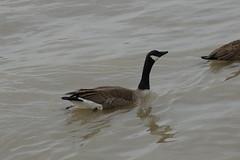 IMGP2173 (MeRyan) Tags: newyork public birds rivers