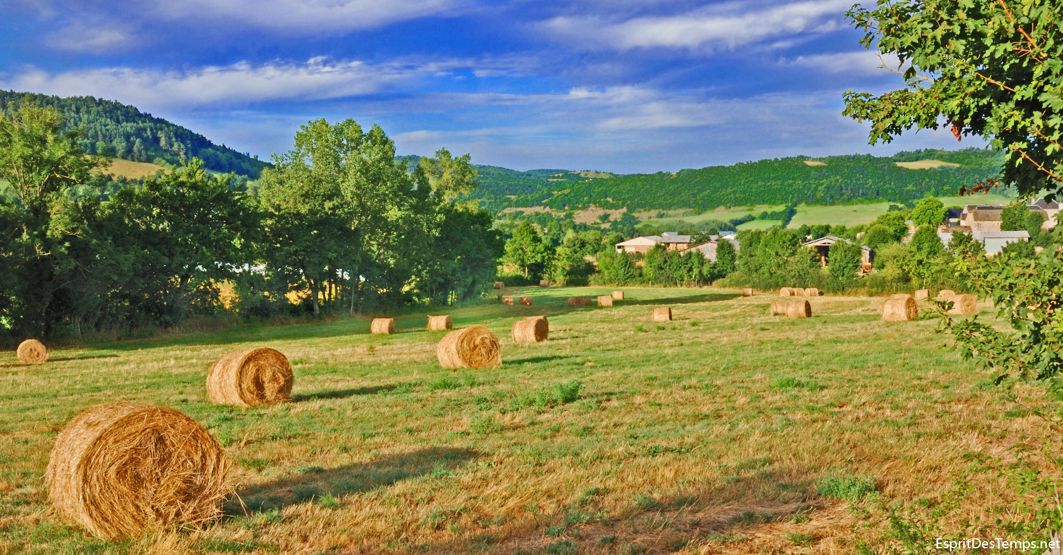 http://farm4.static.flickr.com/3452/3225211830_8f24e7b7d7_o.jpg