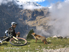Rabosa y ciclista en Pineta