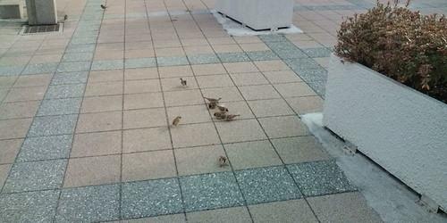 ズームなしでスズメを撮影