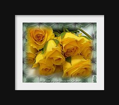 FBI: My creation ADRIENNE'S YELLOW ROSES (Frozen in Time photos by Marianne AWAY OFF/ON) Tags: roses yellow fdsflickrtoys yellowflowers flickrtoys fbi pictureperfect flowerpix yellowroses blueribbonwinner flowercloseups friends~ framedphotos favorites10 creativephoto flowerphotography artisticflowerphotos nationalgeographicwannabes faithfulflickrfriends nationalgeographicareyougoodenough fabulousflowers aroseaqueeninitself favoritesbyinterestingness heartawards extraordinarycompositions platinumheartaward betterthangood fabulousflora arealgem ilovemypics thegoldenflower mimamorflowers flickrflores flickrflorescloseupmacros yellowflowerspool excellentflowers~ naturegreenstar flowers flowersexcellentcloseups fdsflickrtoyspool extremeboquet nationalgeographiswannabes
