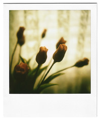 (coeurenbois) Tags: flowers stilllife flores fleurs polaroid sx70 porcelaine porcelain softlight naturemorte porcelana polaroidsx70 sx70sonar autaut sx70sonarautofocus sx70autofocus sonarautofocus